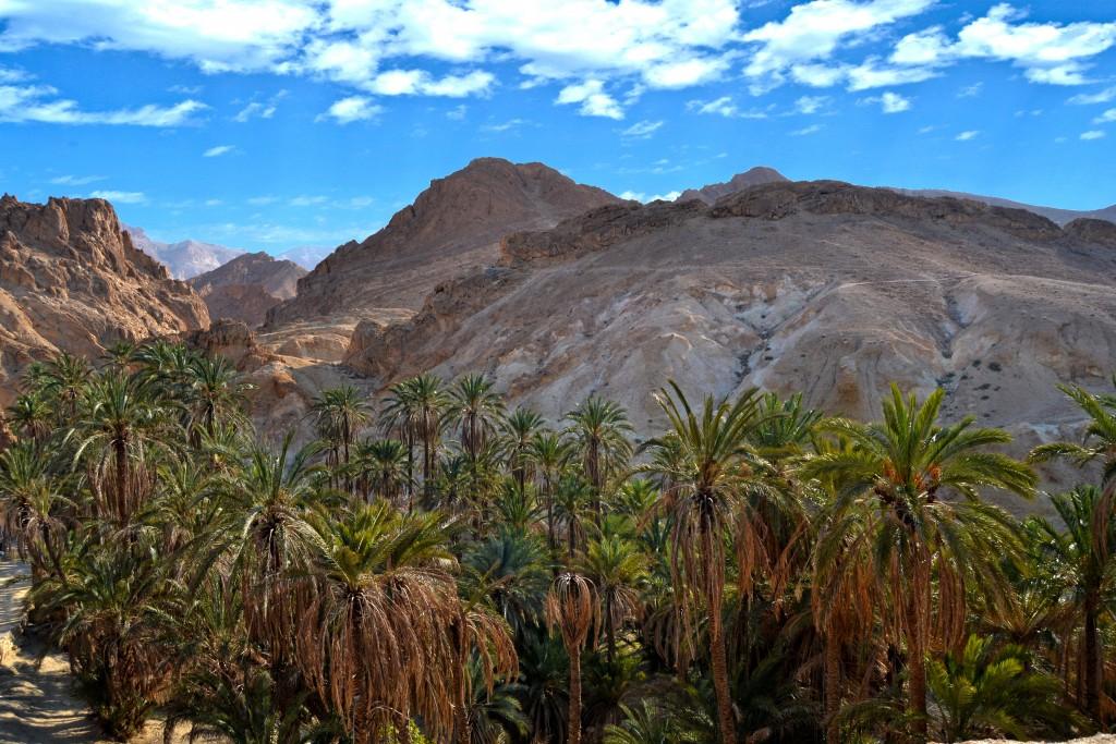 mountain oasis tunisia