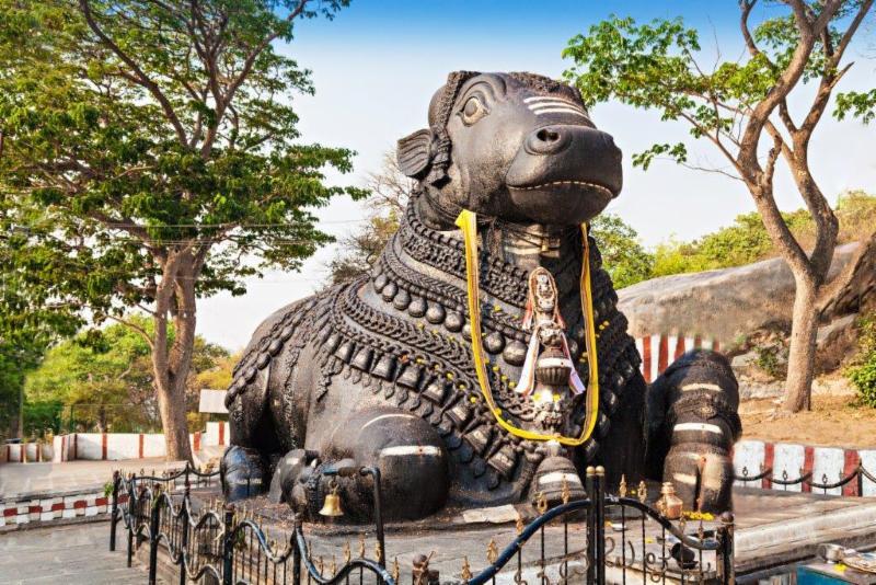 Nandi Bull, South India