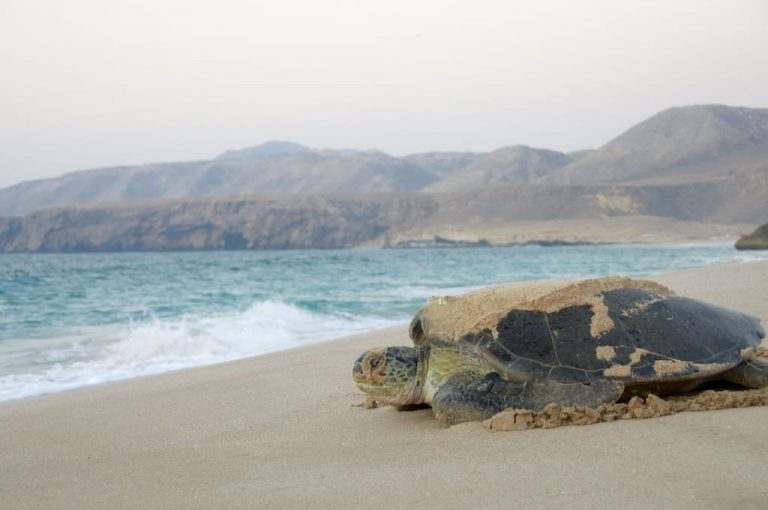 Turtle Watching in Oman | Family Holiday to Oman