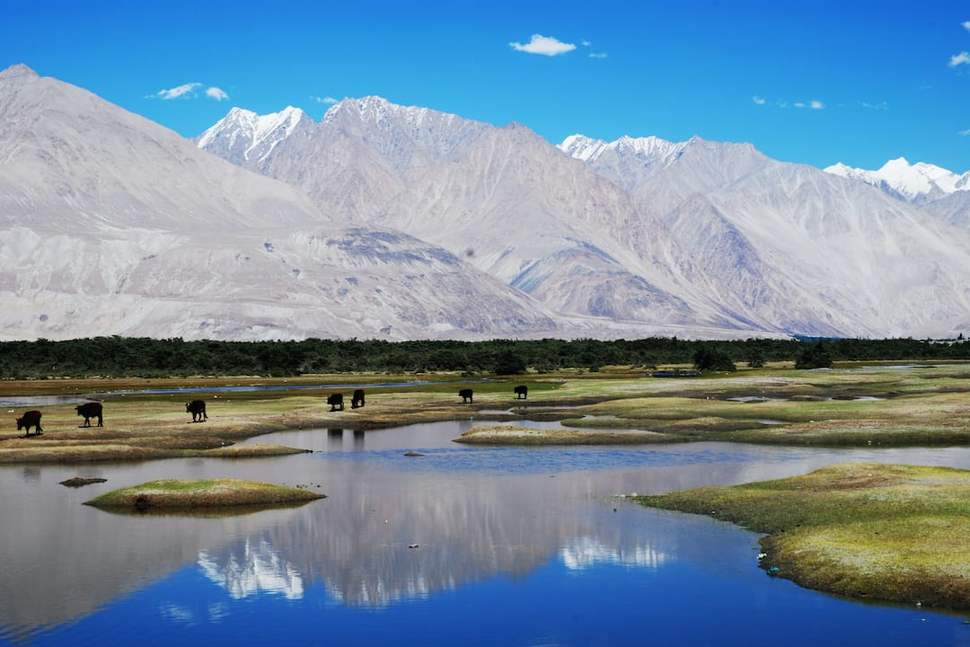 See the Nubra Valley on a family holiday to Ladakh