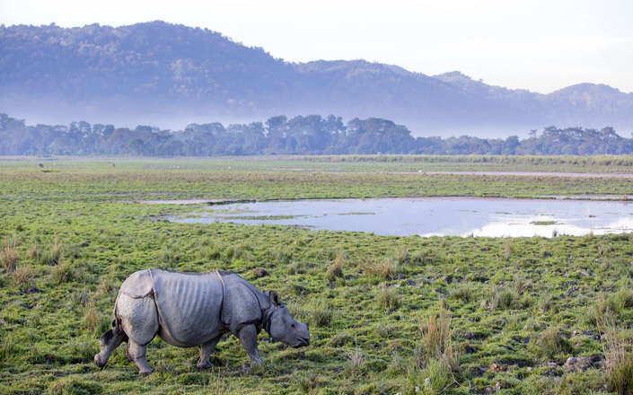 Spot rhino in Kaziranga National Park on a tailor made holiday to North East India