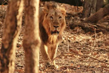 Tribes & Lions of Gujarat - Tailor-made India holiday