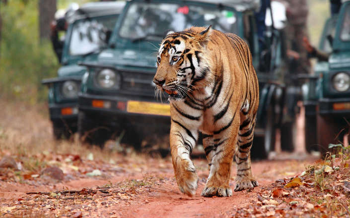 Visit tiger reserves on a tailor-made holiday to north India