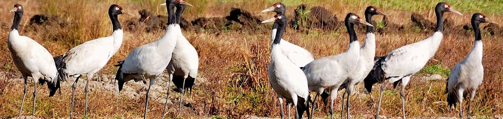 See Bhutan's black-necked cranes on a private tour to Bhutan
