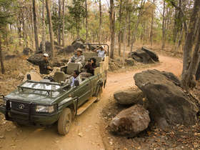 A Classic India Tiger Safari which visits three of central India's best national parks