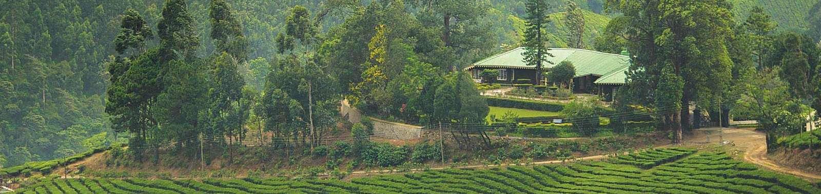 Talayar-Valley-Bungalow-Panoramic